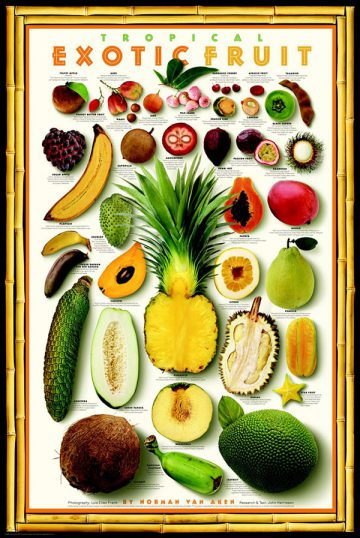 The Great Exotic Fruit, 1995