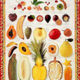 A Word On Food: Tropical Fruits